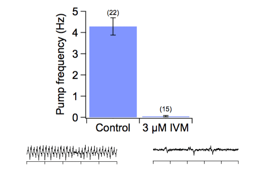 Bar graph showing mean C. elegans EPG rates with and without Ivermectin treatment. Example waveforms for both treatments are shown.