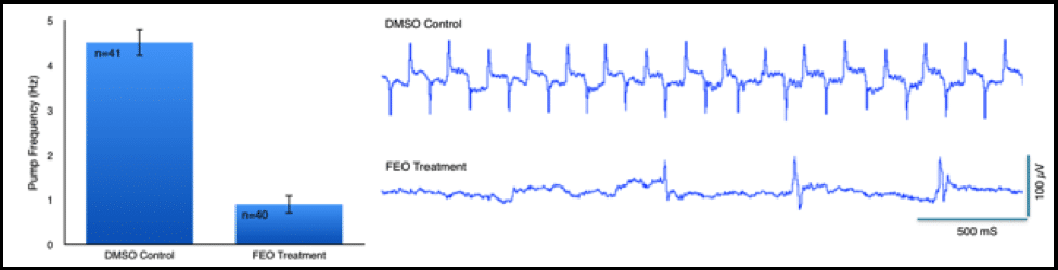 A bar graph showing C. elegans EPG rate with and without fennel treatment. Example EPG waveforms are displayed for both populations.