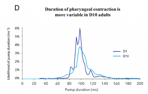 Duration of pharyngeal contraction