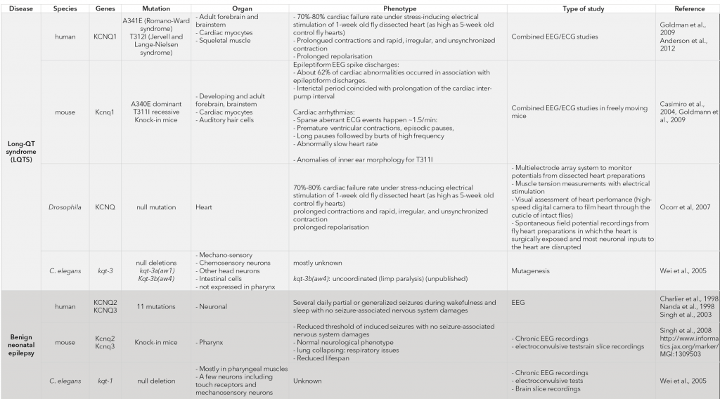 Recapitulation of the physiological effects of KCNQ mutations in various models.