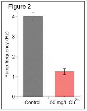 Pump frequency of C. elegans after exposure to 50 mg/L Cu2+