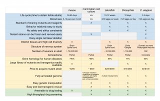 Physiological Comparison of model organisms commonly used in biomedical research
