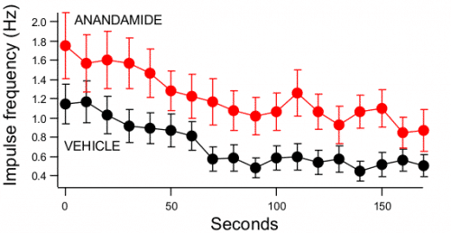 The Endogenous Cannabinoid Anandamide causes Hyperphagia in <em>C. elegans</em>