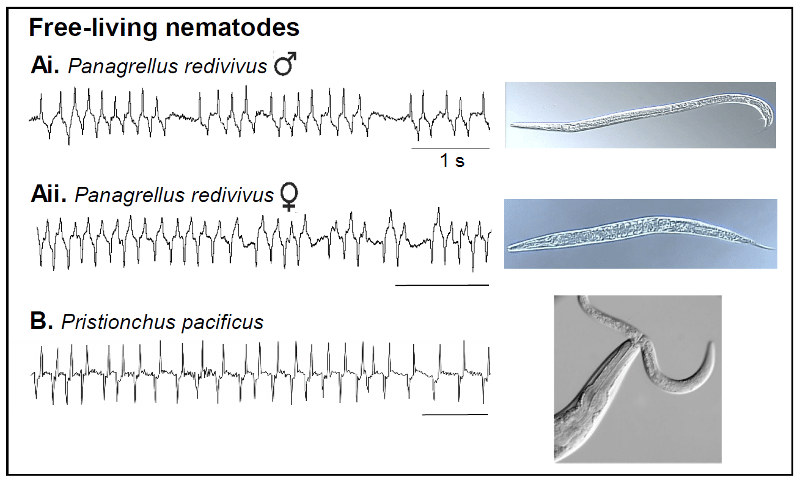 Pharyngeal Recordings (EPGs) taken from different species of free-living nematodes