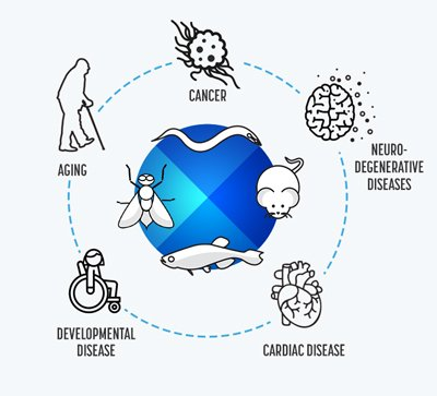 Diseases and animal models
