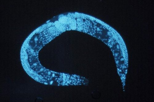Are worms the future of drug development?