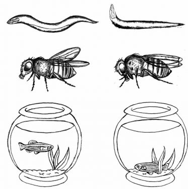 Worms, Flies or Fish? A Comparison of Common Model Organisms  — Part 2: Models for human diseases