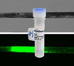 NemaMetrix reagents