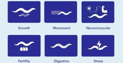 transgenic-functional-analysis