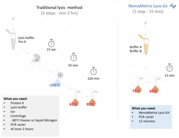 C. elegans lysis methods comparison