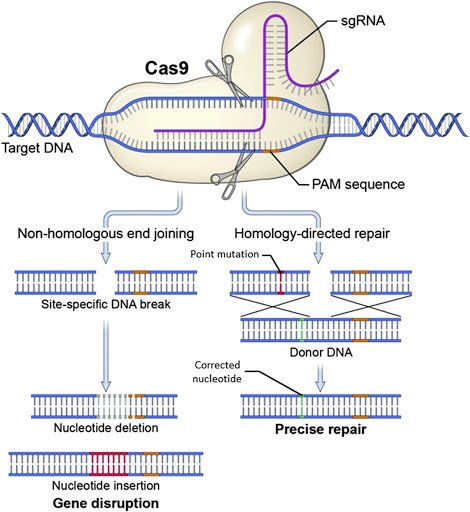 cas9-method