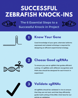 6 key steps to a successful zebrafish knock-in