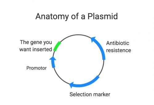 Anatomy of a plasmid