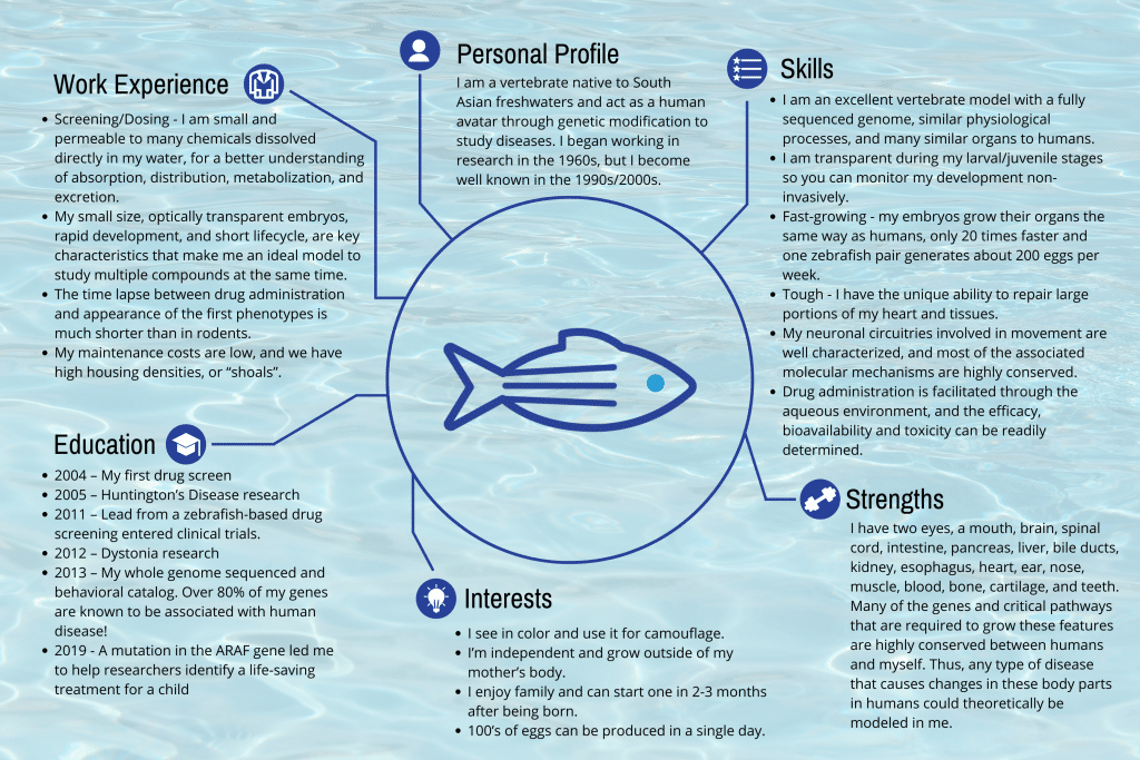 zebrafish cv highlighting important facts and statistics that make the zebrafish an ideal model organism for studying human diseases