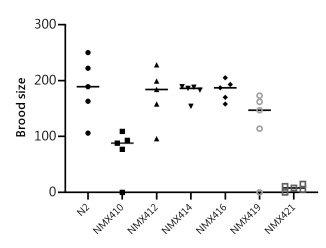 Measuring C. elegans brood size in progeny production.