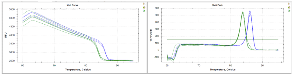 Figure 1: HRMA melt curve and melt peak traces as shown using BioRad CFX Maestro software. Homozygous mutant candidates (green trace) with a predicted melting point of 82.5°C as compared to wildtype control samples (blue trace) with a predicted melting point of 86.5°C. Candidates of interest are easily differentiated and identified in real time.