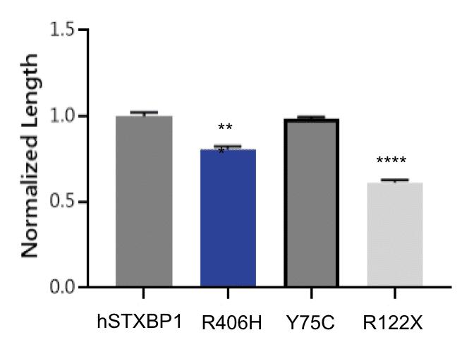 Morphology analysis using C. elegans