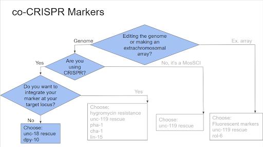 co-crispr markers