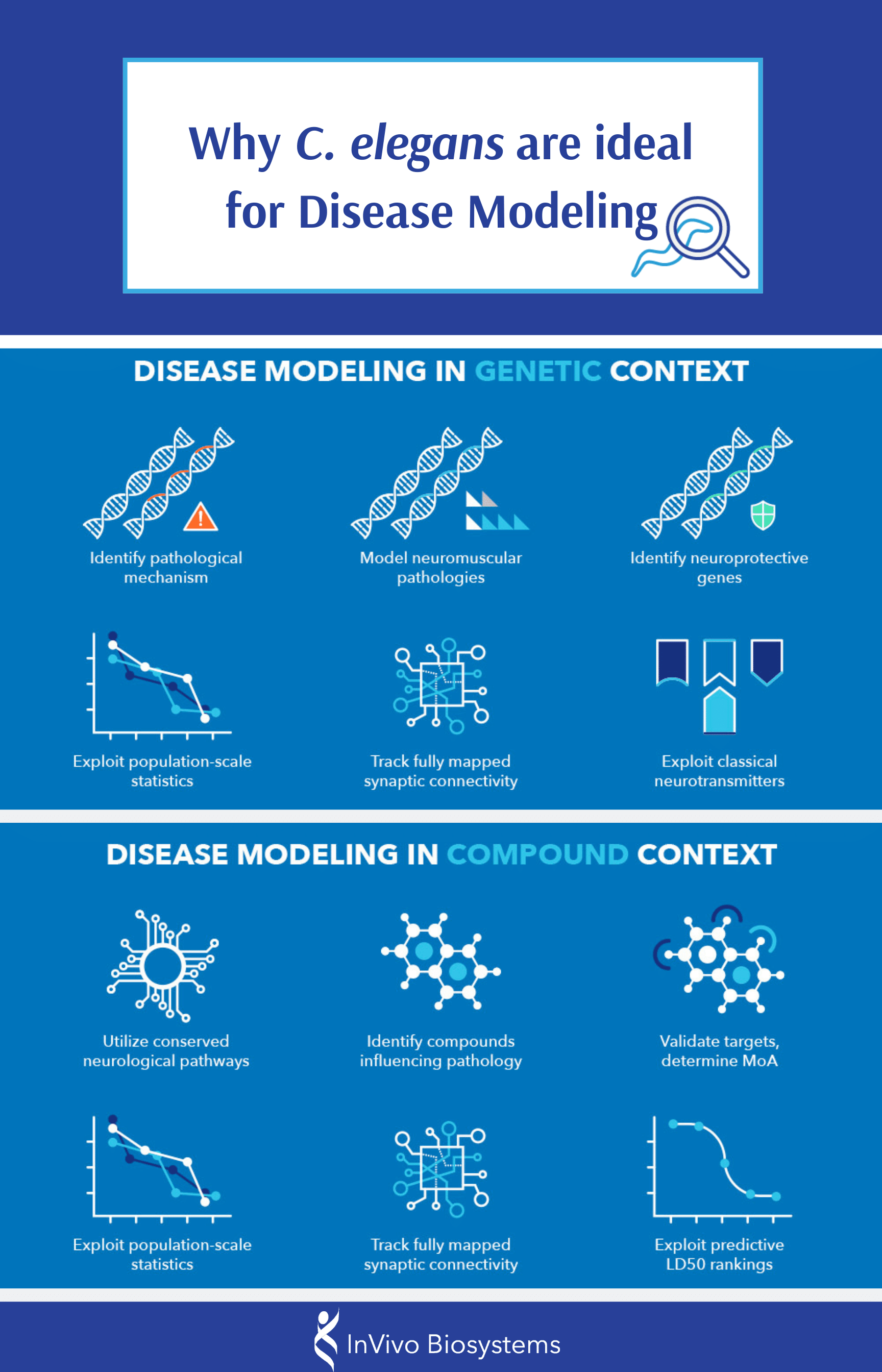 Why C. elegans are ideal for Disease Modeling