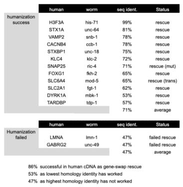 whole gene humanization table