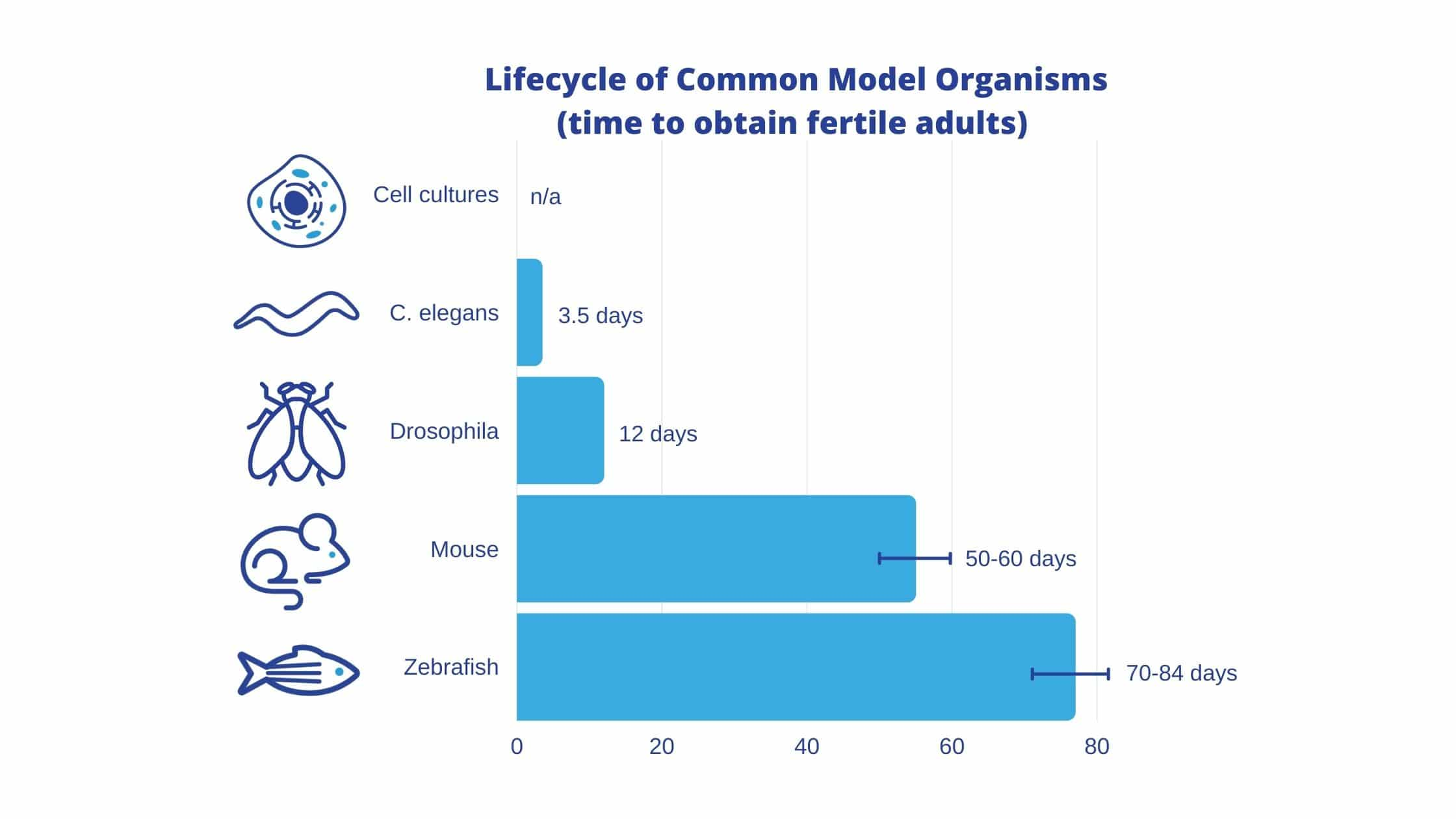Lifecycle comparison of common model organisms