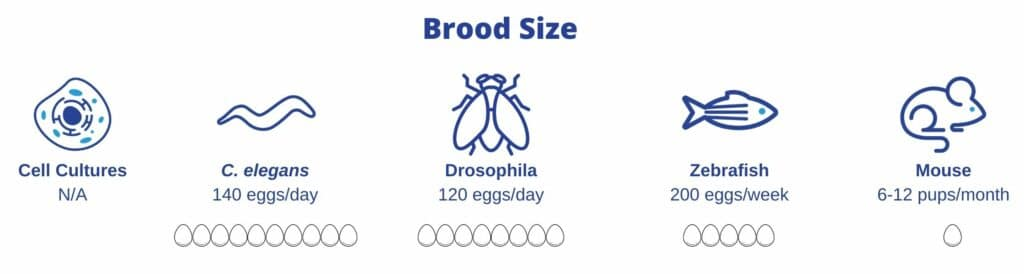 broodsize