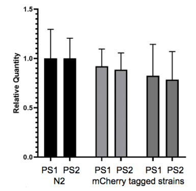 Fig. 9- Expression analysis shows endogenous fluorescent tagging has no effect on expression of the tagged gene.