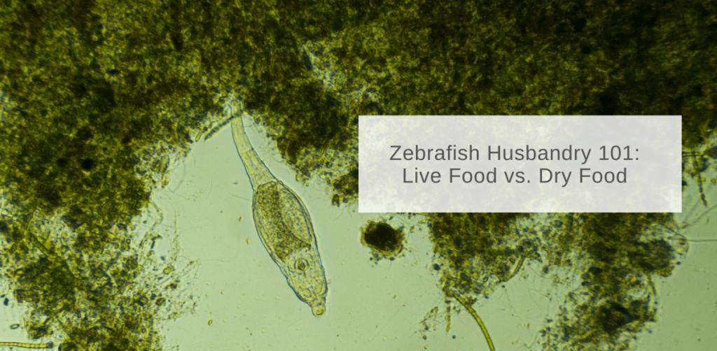zebrafish feeding live vs dry food