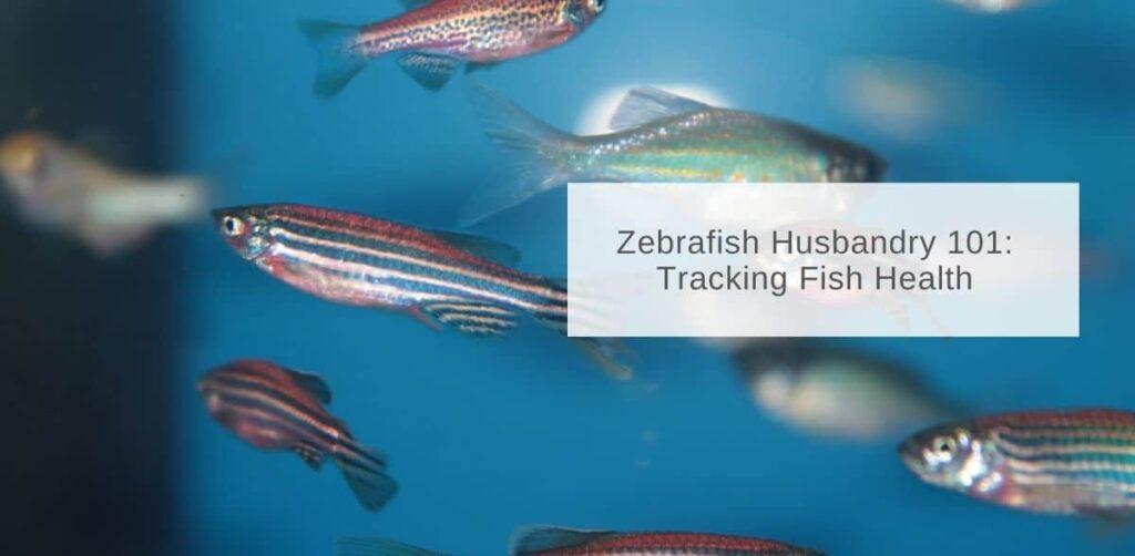 Tracking fish health