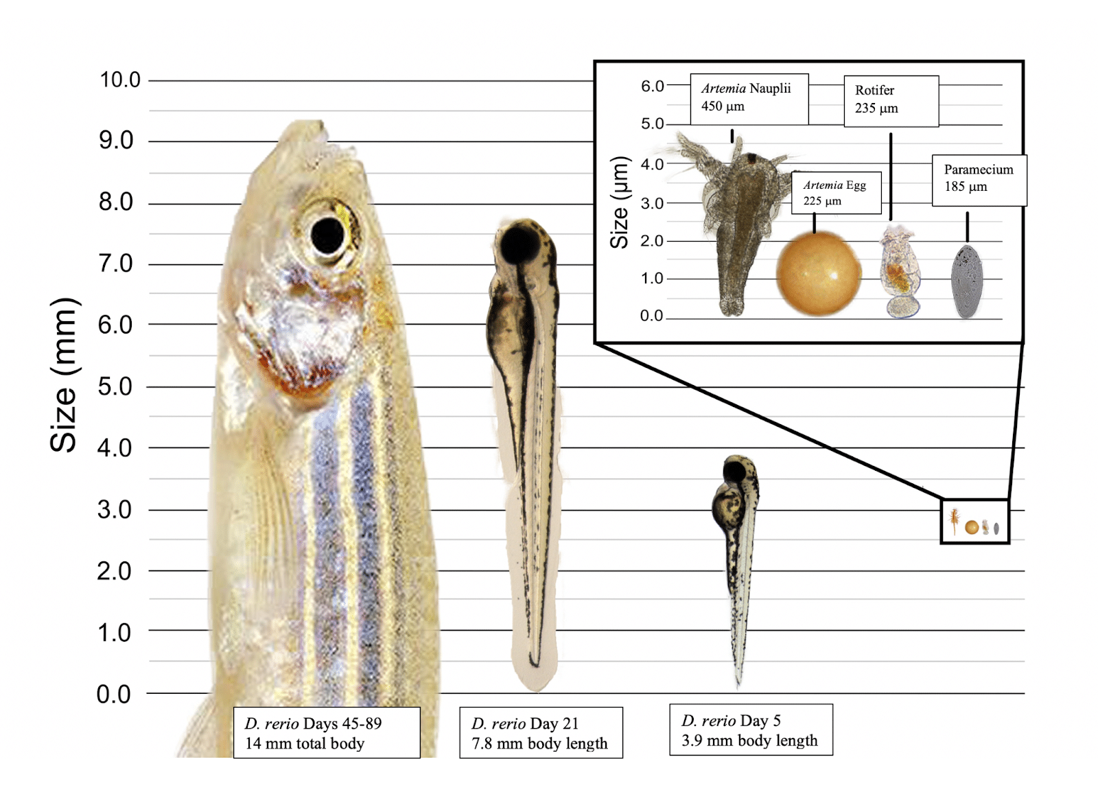 scaled fish reference