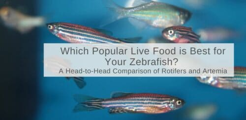 Which popular live food is best for your zebrafish?