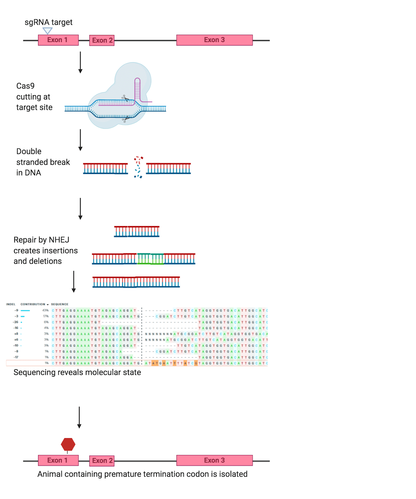 Figure One. Example of the Indel method (created in BioRender)