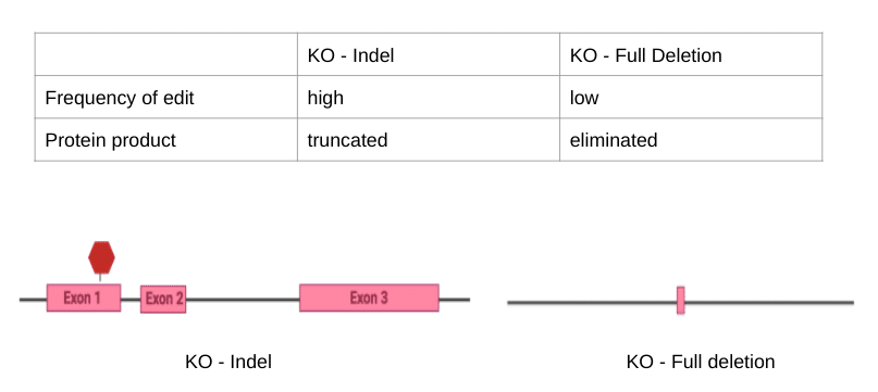 Figure Three. Comparison between the two types of KO techniques (created in BioRender)
