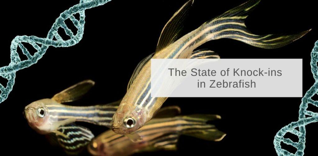 state of knock-ins in zebrafish